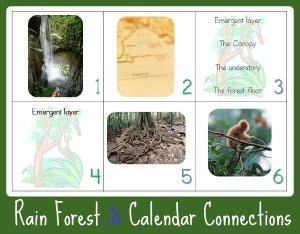 Rain Forest Calendar Connections web