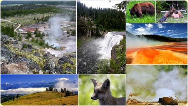 43 Yellowstone NP 2010