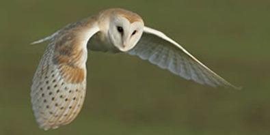 The Wherryman's Web: Langley Staithe: my drivetime barn owl