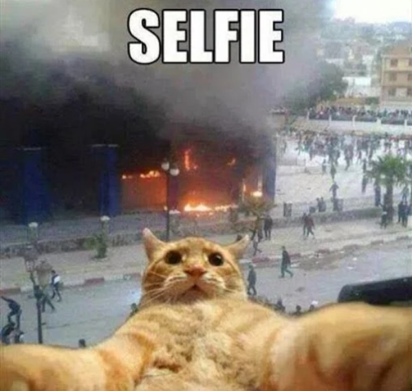 Cute cat taking selfie in front of fire building