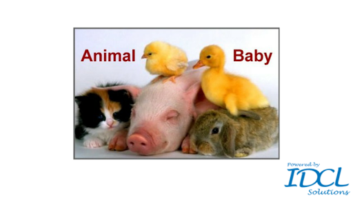Animal Baby: Learn baby name