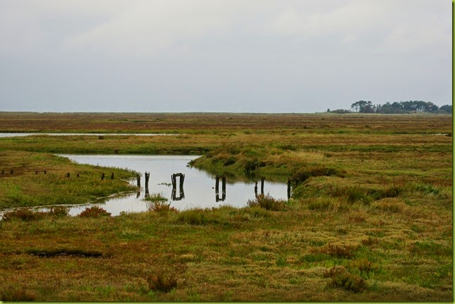 Norfolk coast path Wells to Stiffkey