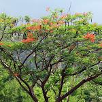 Тайланд 18.05.2012 15-10-21.JPG