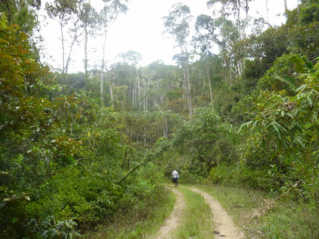 Parc de Mantadia (Madagascar), 29 décembre 2013. Photo : J. Marquet