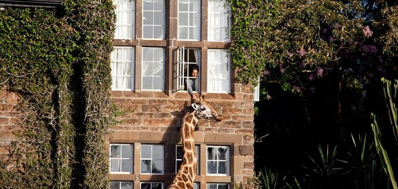 giraffe-manor-6