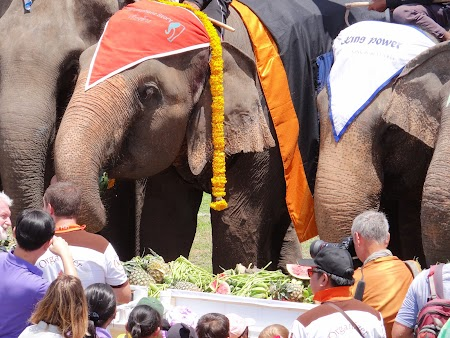 23. Elefanti mancand fructe.JPG
