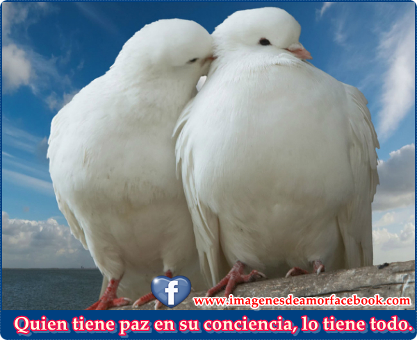 Frases Cortas De Paz Quotes Links