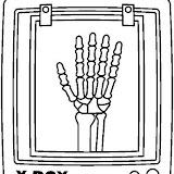 Dibujos De Radiografias Para Pintar
