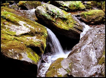 25c2 - Anna Ruby Falls Trail - Oh the sound of rushing, spilling water