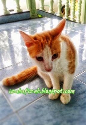 kucingcomel9