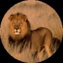 Afra Prins