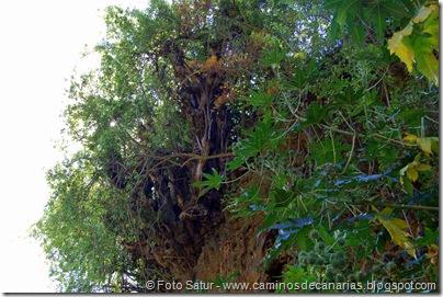 6418 Santa Brígida-Hoya Chiquita(Barbuzano)