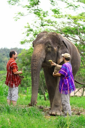 Imagini Thilanda: hranind un elefant, Patara, Thailanda