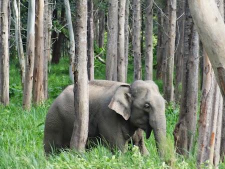41. Elefant salbatic.JPG
