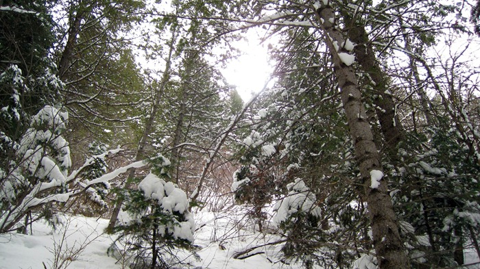 beautiful trees and snow at Elbow Fork Trail in Millcreek Canyon