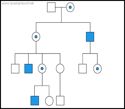 Pedigree chart of sex linked recessive disorder