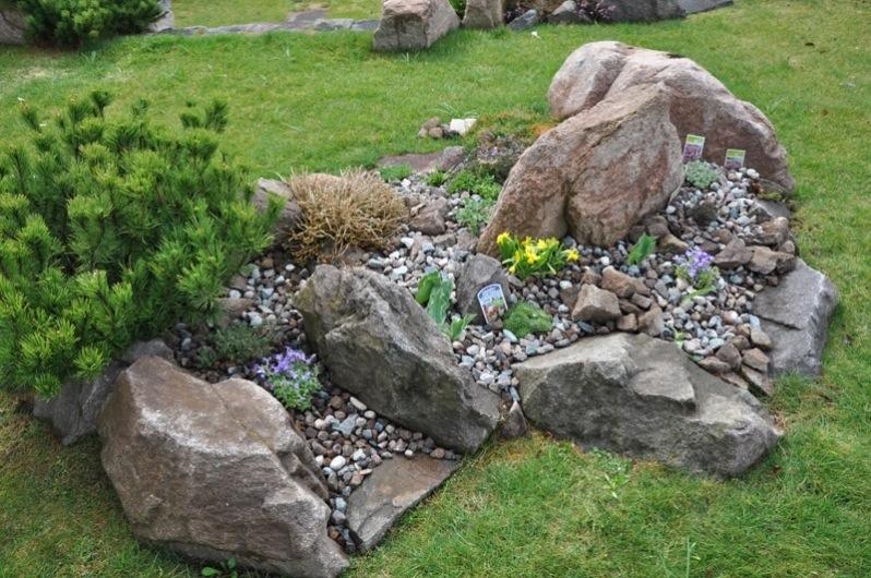 Squarciomomo cambiamenti nel giardino roccioso for Piante da aiuola