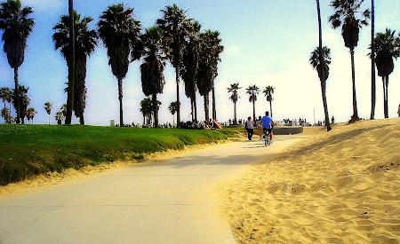 Palmieri din California