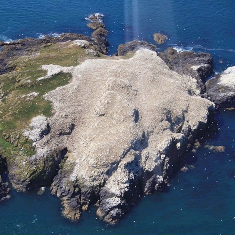 The Guano Covered Island of Grassholm
