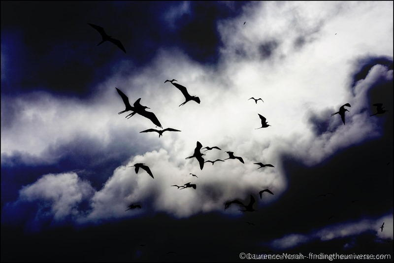 Frigate birds against clouds Scaled