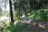 Waldweg an der Rolava