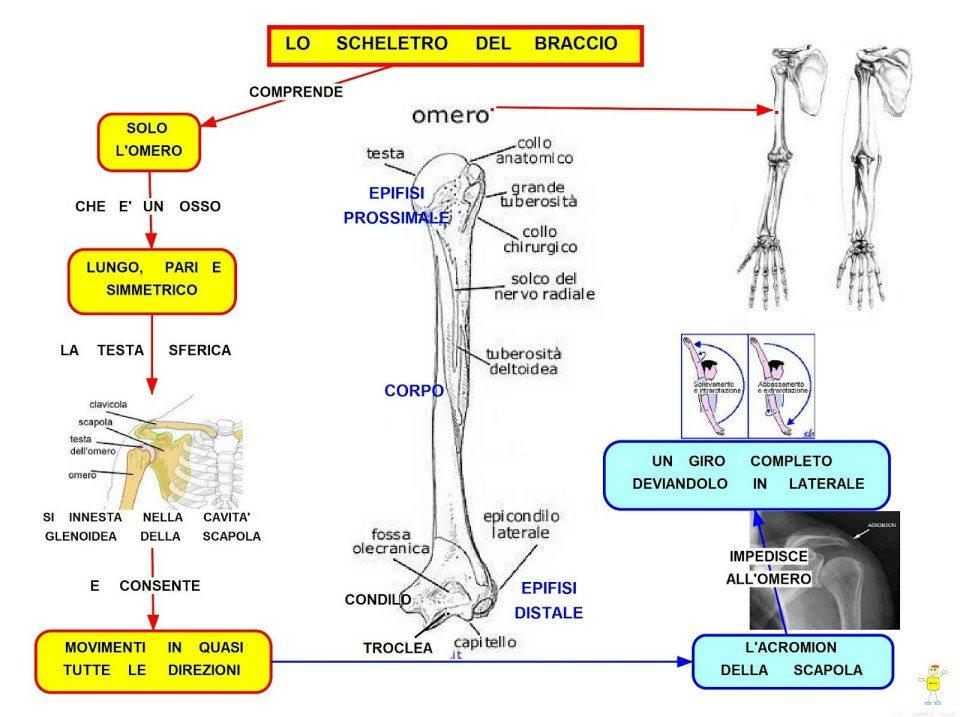 Amato Siti alternativi per cercare Mappe di Scienze-Biologia-Ecologia  NR99
