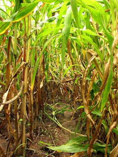 Children Of The Corn 2009 Fertilization Scene