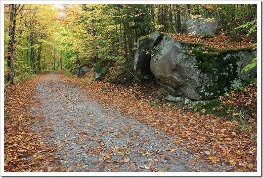 091009_forestroad2