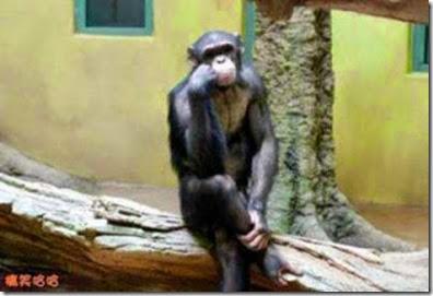 Gambar Monyet Lucu Galau