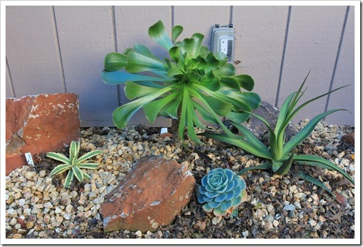 121218_backyard_succulent_bed_12