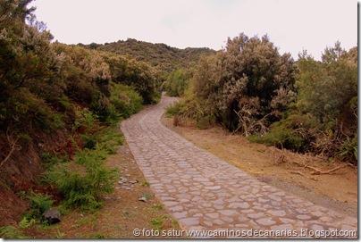 037 Garajonay-El Cedro