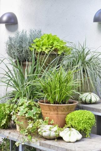 De gode græsser - Claus Dalby - mit haveliv