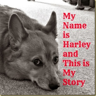 My Name is Harley cover