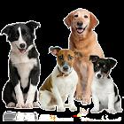 Dog Quiz icon
