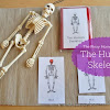 Human Body Unit: The Skeletal System
