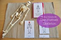 Human Body Unit: The Skeletal System