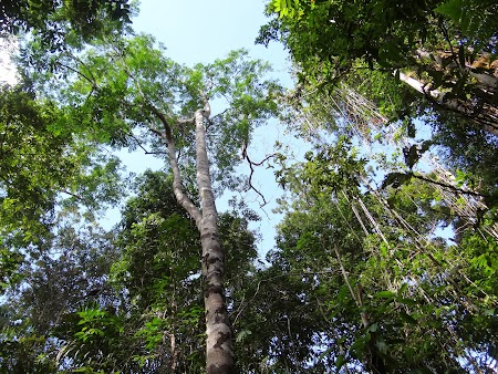 07. Padure din jungla.JPG