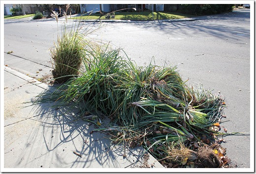 111203_plants_in_curb