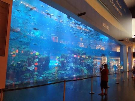 Acvariu din Dubai Mall