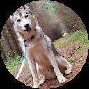 Image Google de The wolf Siberian