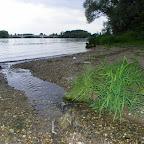 Saône, proximité du grand colombier photo #1311