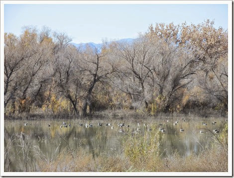 2014-11-14 New Mexico, Sevilleta NWR - Wetlands Drive - Pond B