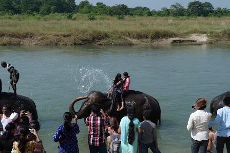 Dus cu elefantii