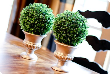 DIY boxwood topiaries