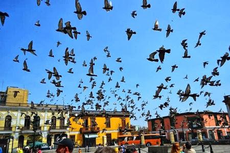Obiective turistice Peru: Porumbei in Lima