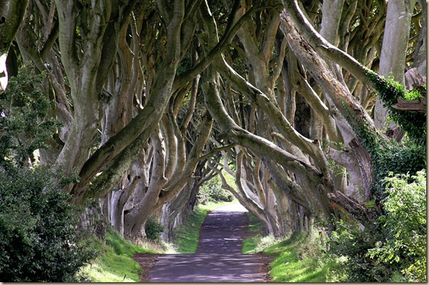 The-dark-hedges.bmp