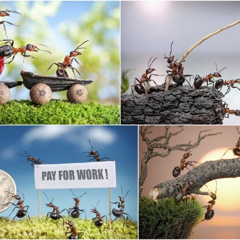 The Fantasy World of Ants by Andrey Pavlov