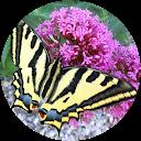 Image Google de bruno rouganne