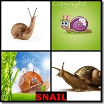 SNAIL- 4 Pics 1 Word Answers 3 Letters