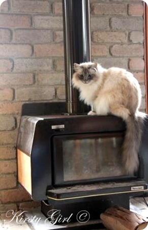 fireplace cat #2